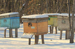Beekeeping in Primorsky Province: Challenges and Opportunities. A NEEDS ASSESSMENT REPORT.