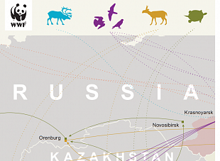 Wildlife trade in the Russian Federation. New analysis of 2020 for your attention.